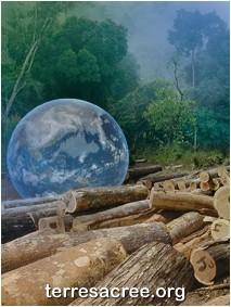 la déforestation de l'Amazonie en recul de 45% sur un an